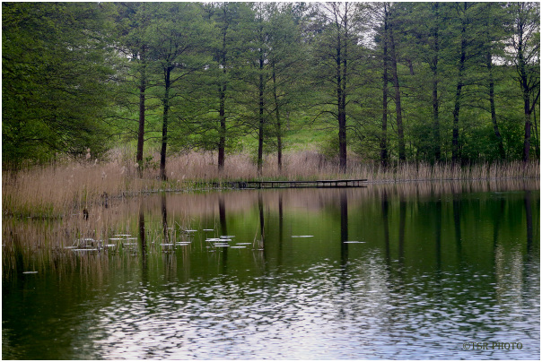 Green shore 2
