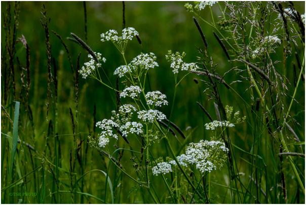 White- green meadow