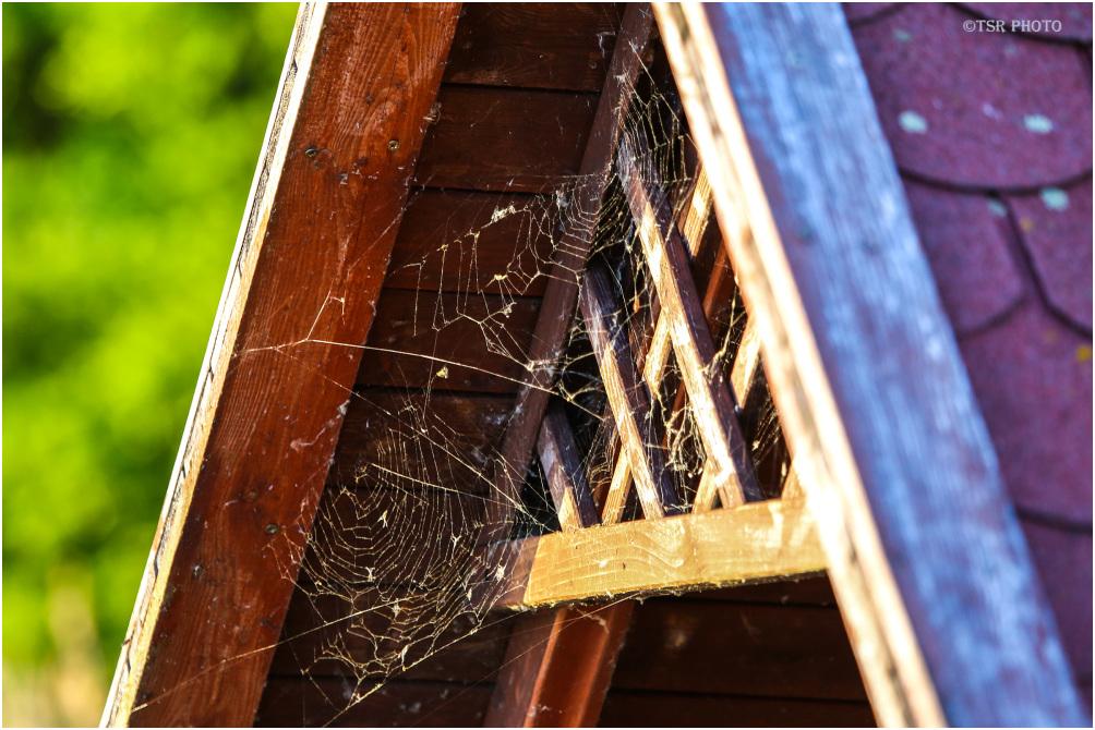 Spider's  net