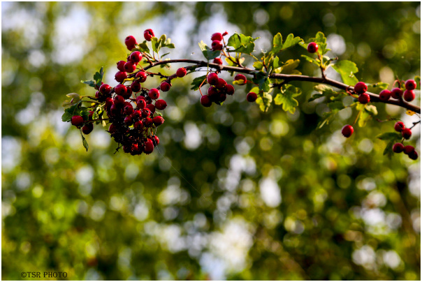 Colours of autumn 4