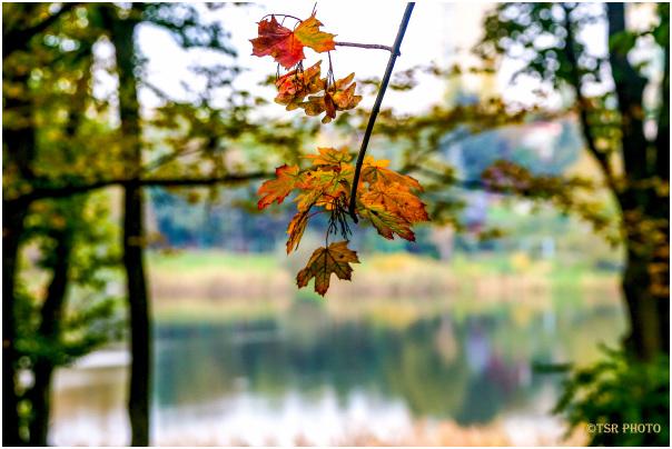 Around the Lake 3