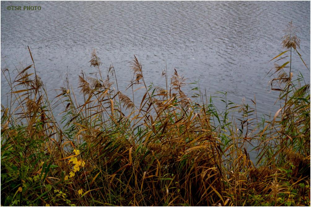 Around  the Lake 5