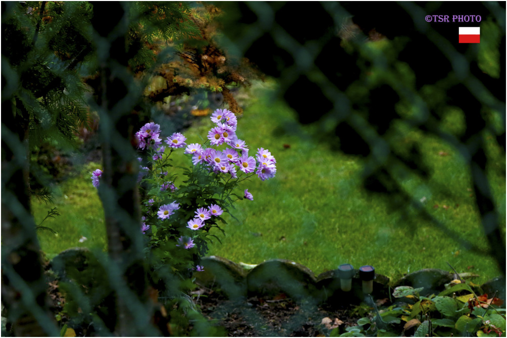 Last flowers in the Garden