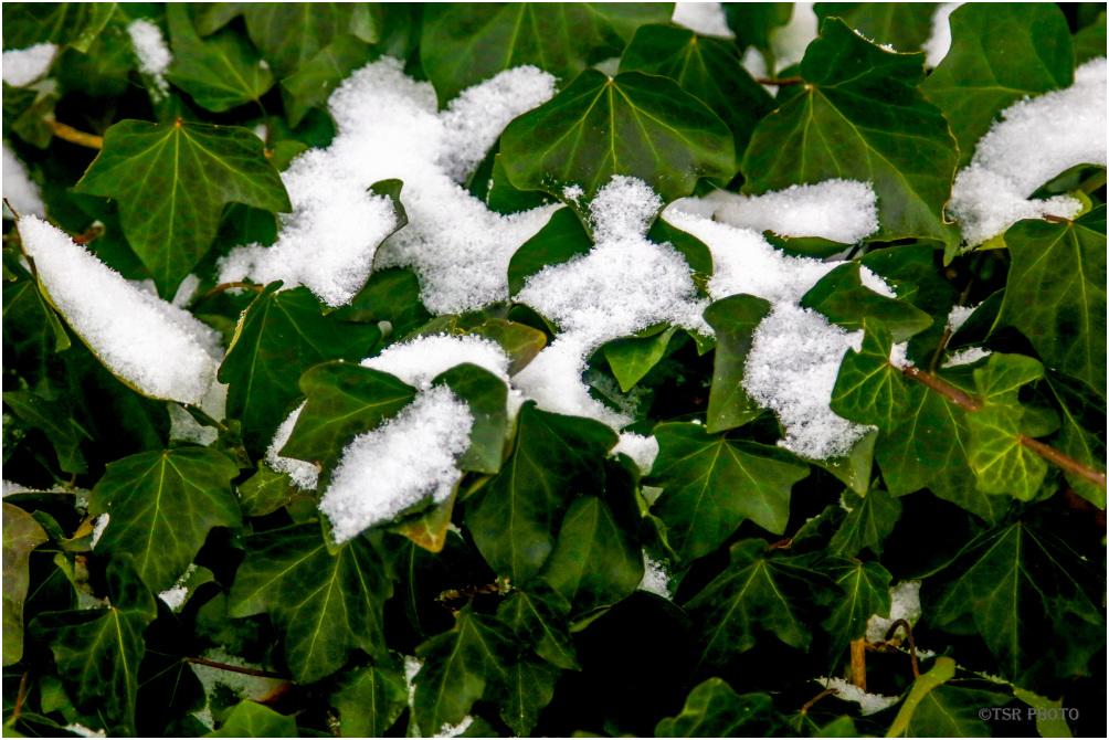 White-green winter