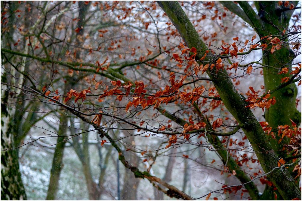 Last leaves 2