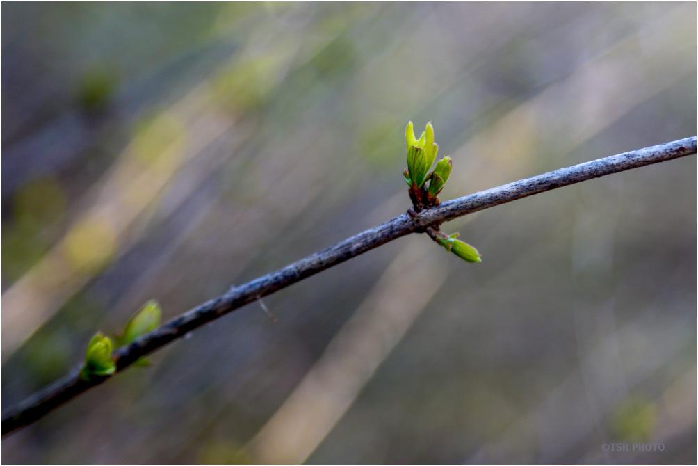 Looking for sings of spring 4