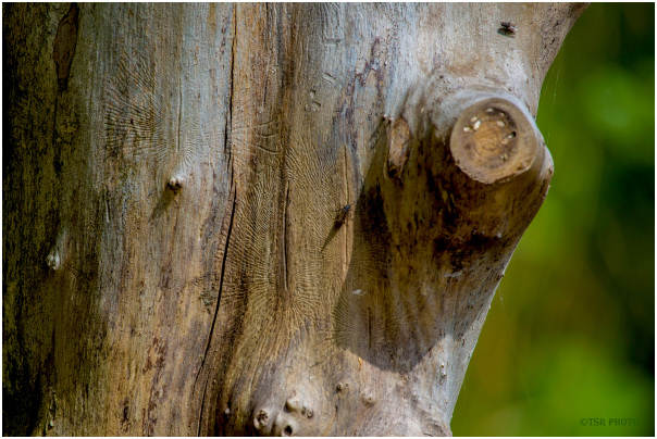 Trunk with traces