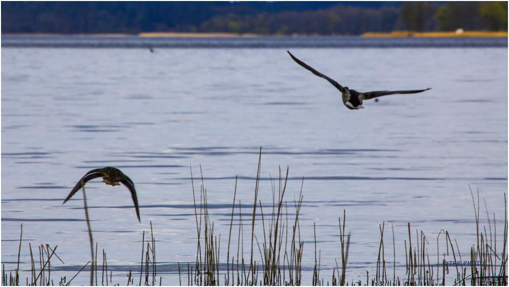 Ducks in the air