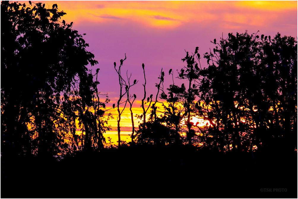 Cormorants in the evening