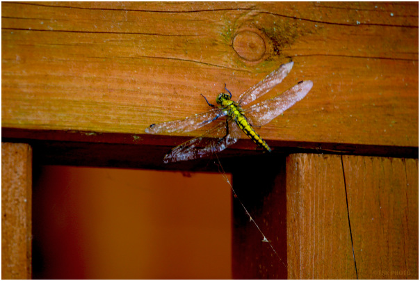 In the spiderweb