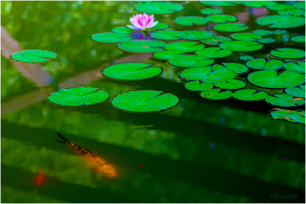 Life in the Pond 2
