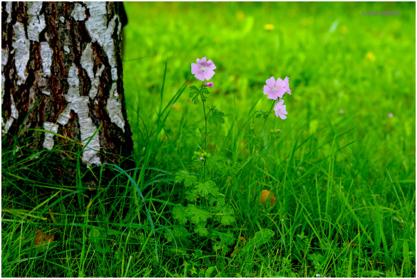Meadow by The Forest