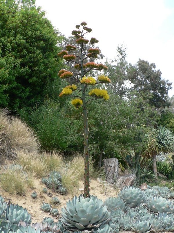 A funky tree
