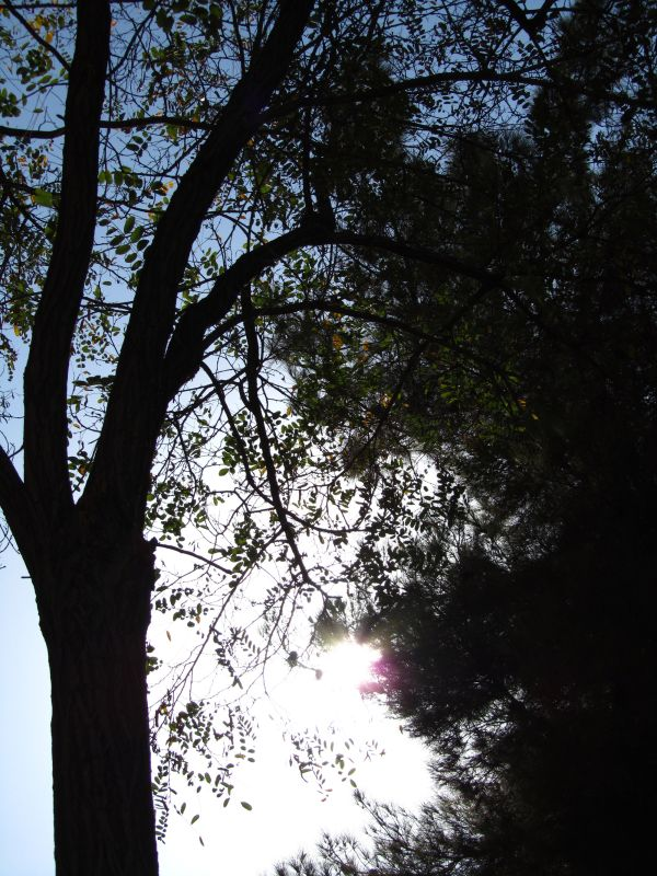 High noon at the park No.2