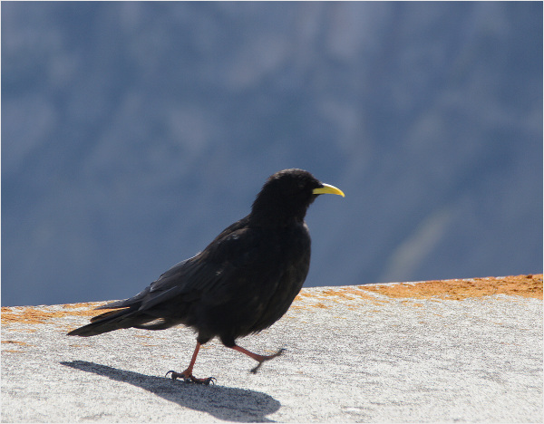 la balade de l'oiseau