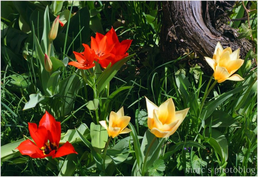 Fleurs volées dans un jardin