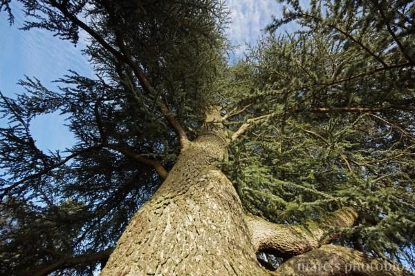 monter dans l'arbre