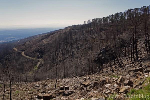 la forêt a été défigurée