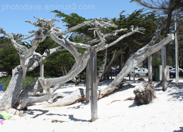 Beach Wood Tangle