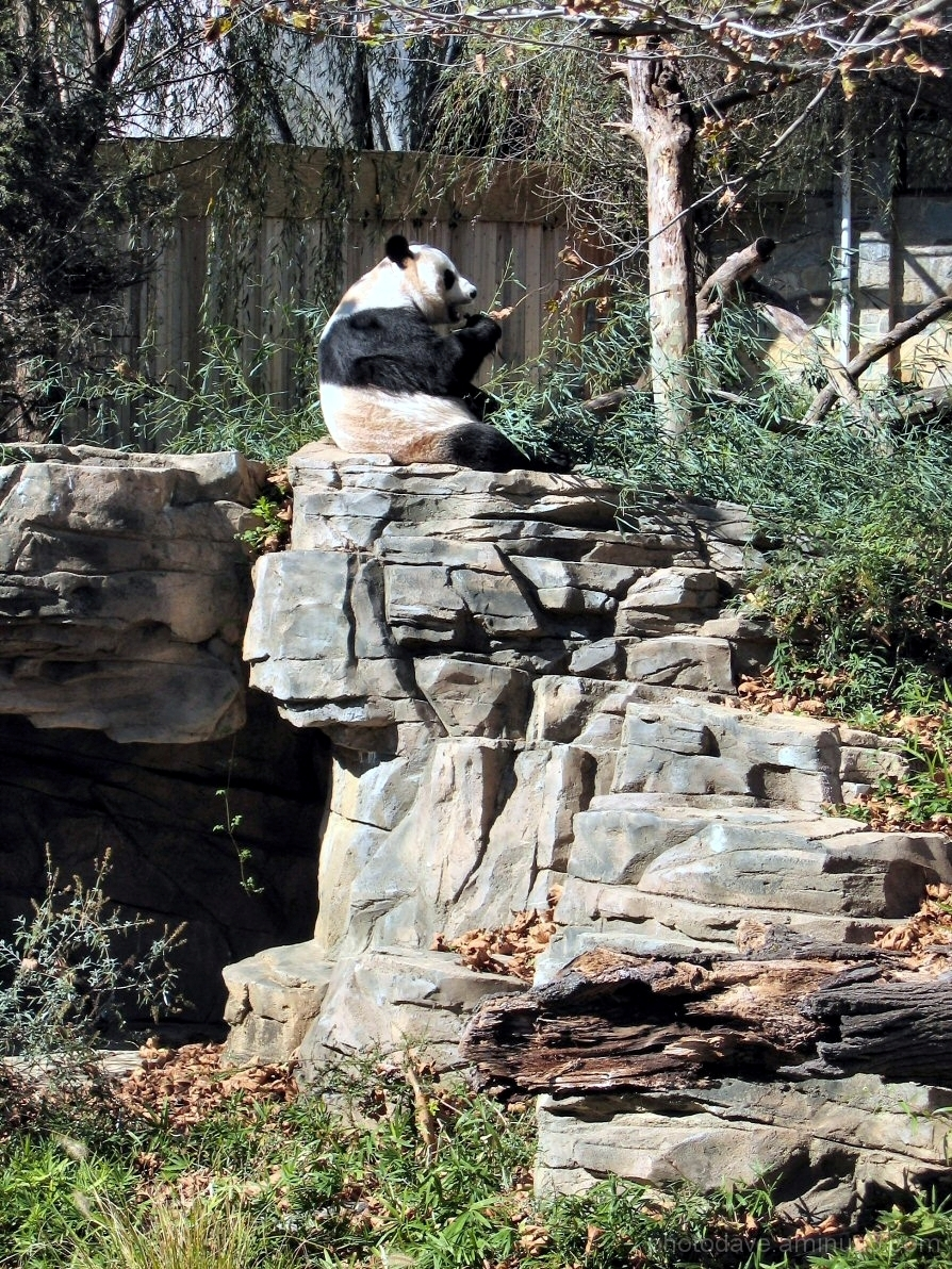 Sitting Pretty at the National Zoo