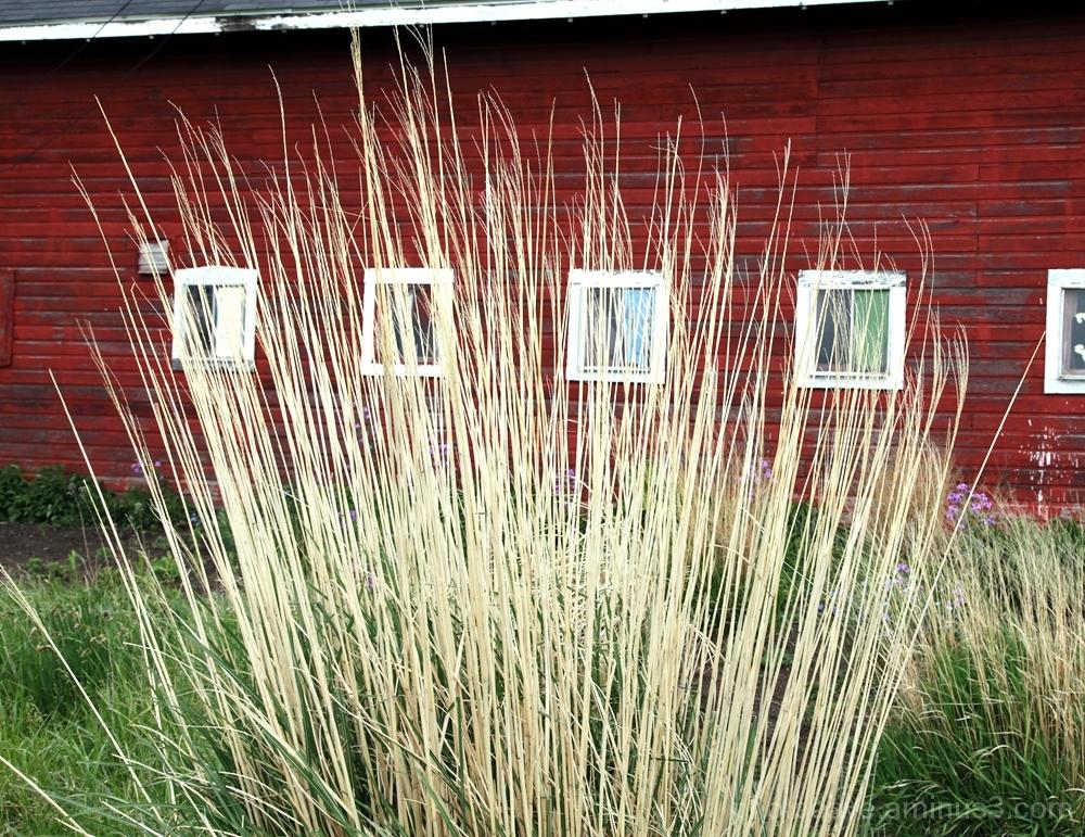Grassy Venue