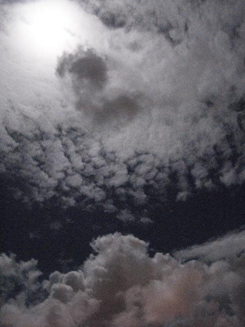 Nuit de tortue #11 (pleine lune)