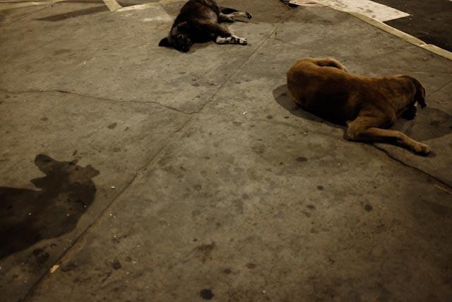 Les chiens de ville