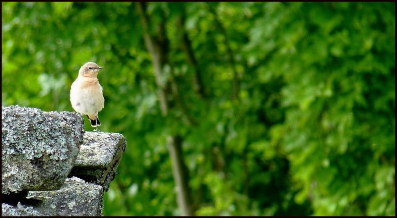 Bird on green background