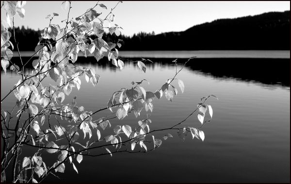Autumn without colors