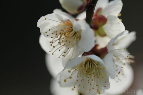 A bouquet of plum