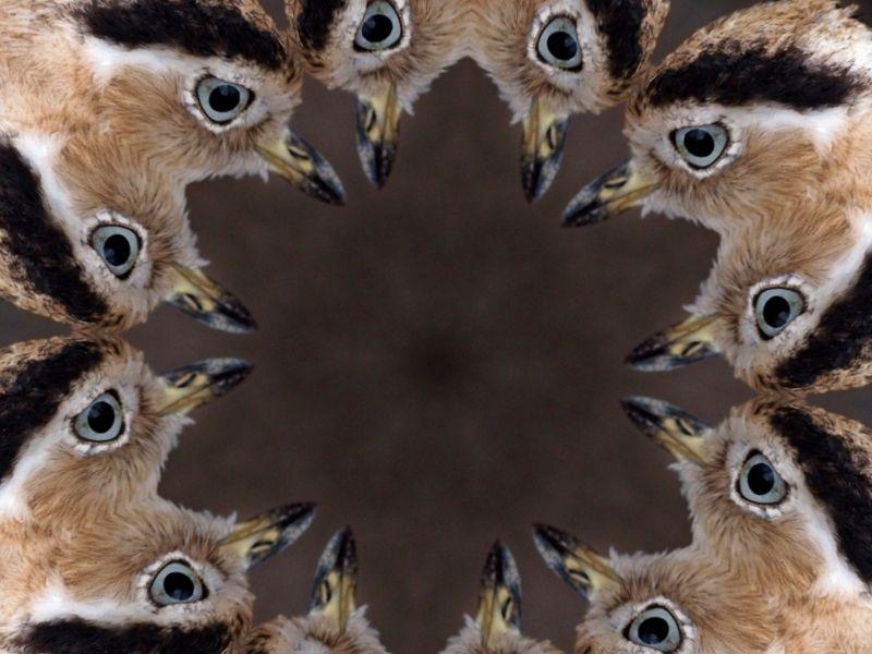 A ring of bird heads