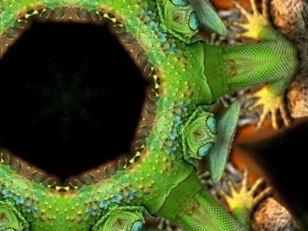 Leguan - kaleidoscope