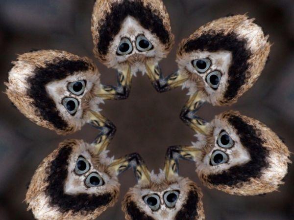 Kaleidoscope view of a bird's head