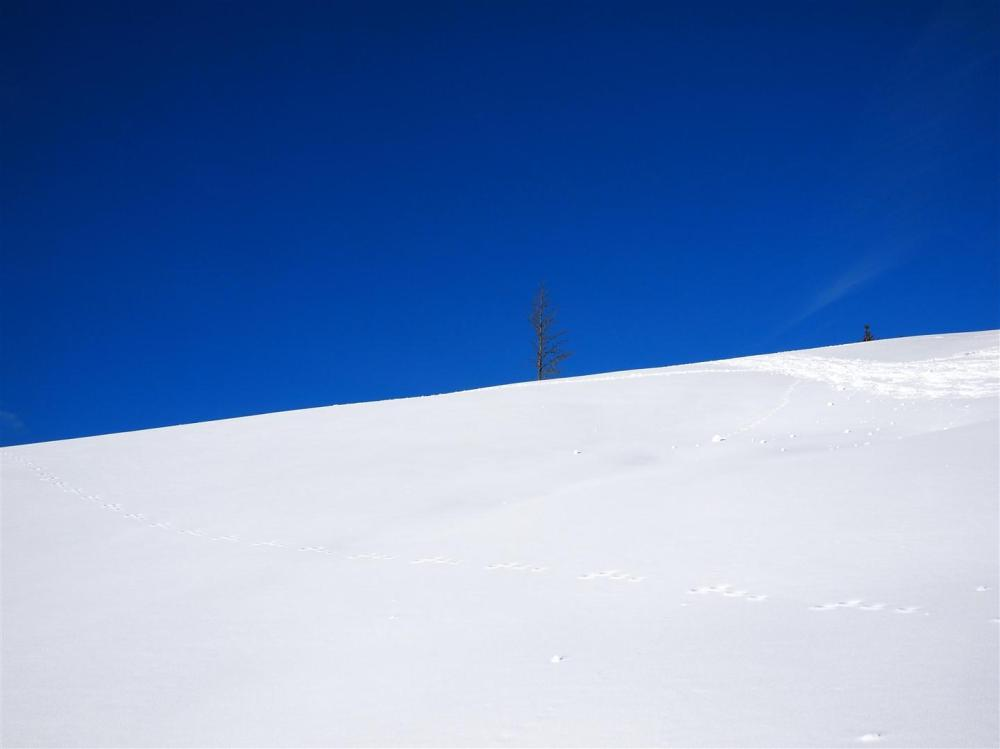 Blue skies, white snow Schwarzwald