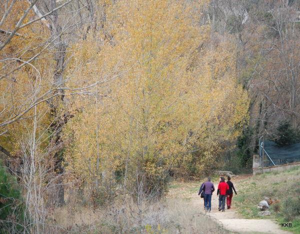 Autumn in Manzanares El Real