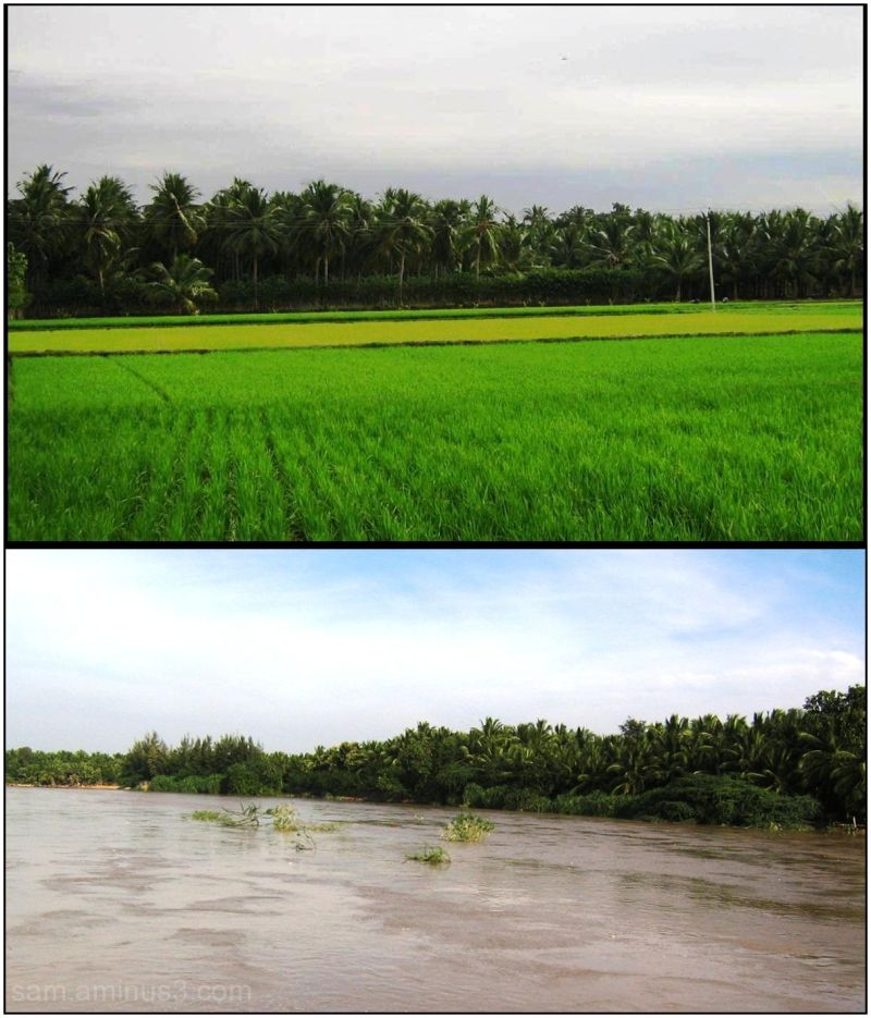 Paddy fields near Thanjavur