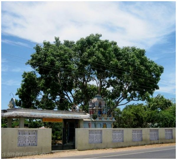 Pillaiyar under Pipal tree