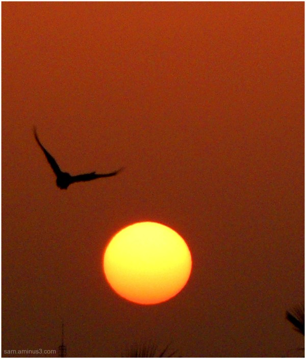 Sunrise Chennai