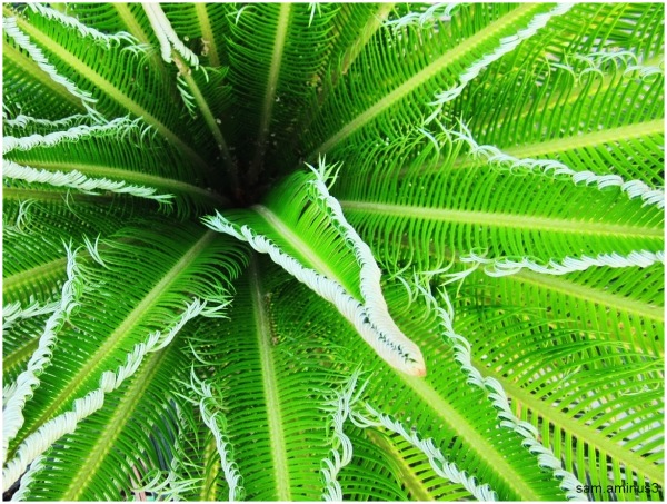 A Green Plant