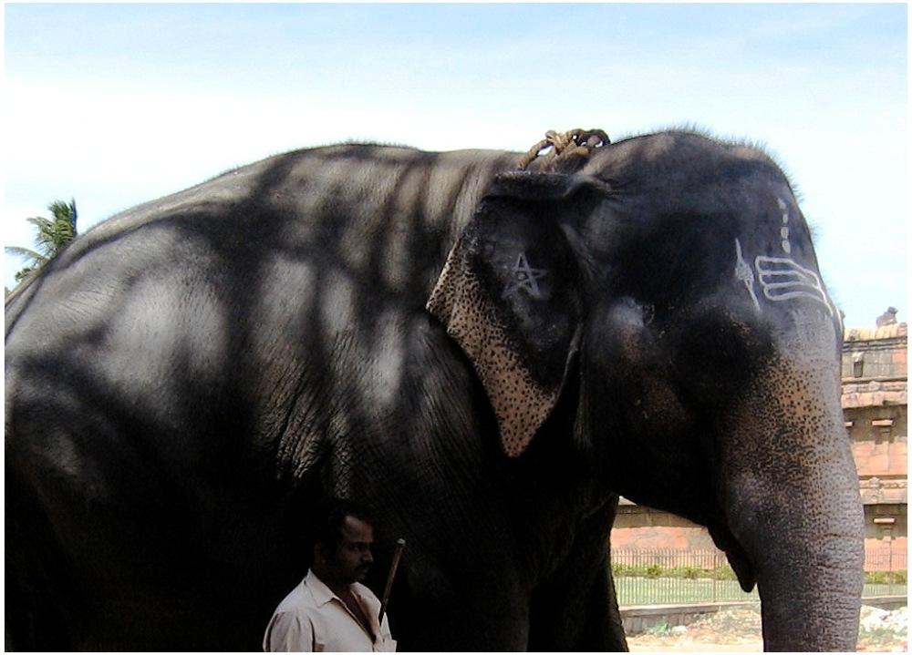 Elephant Thanjavur Temple