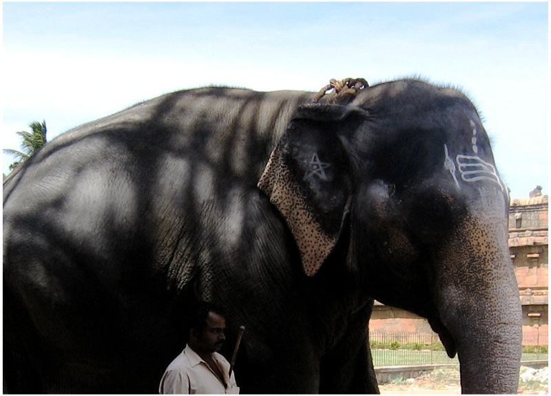 Elephant Thanjavur Temple