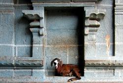 At Thirukkadaiyur Temple
