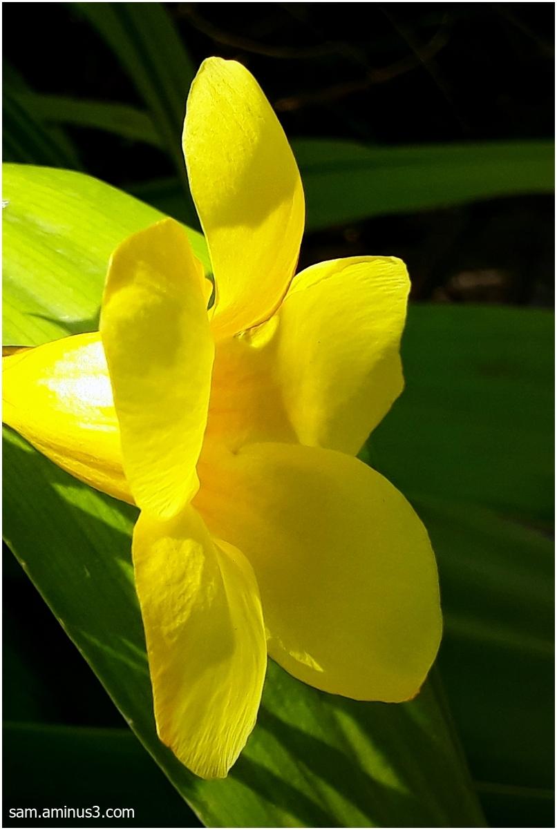 An Yellow Flower