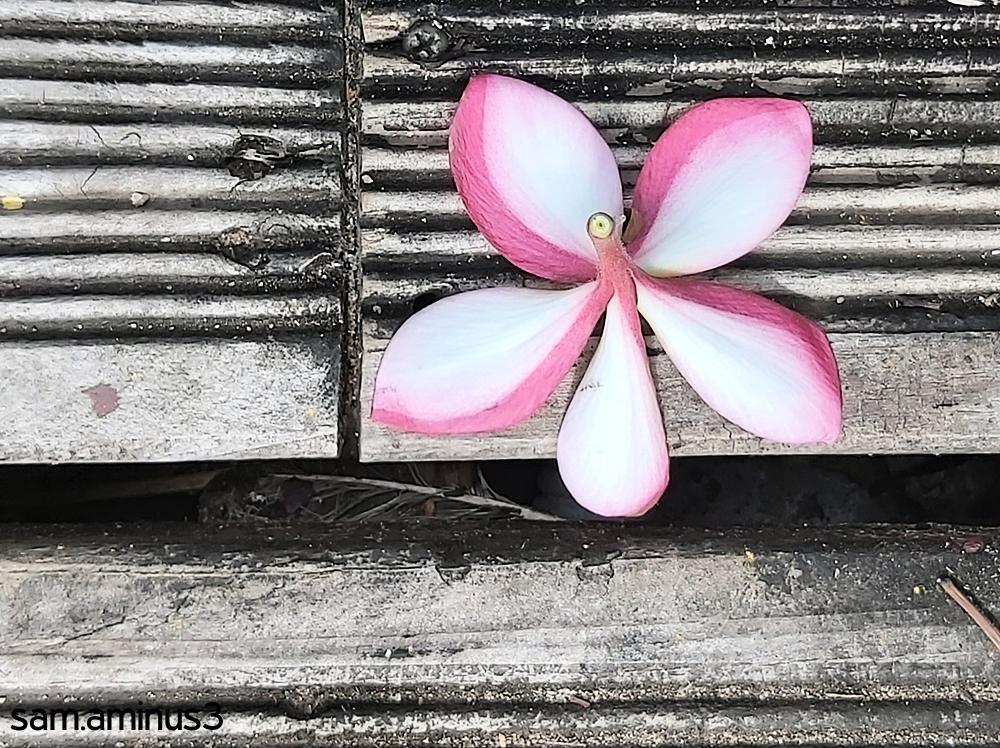 A Fallen Flower