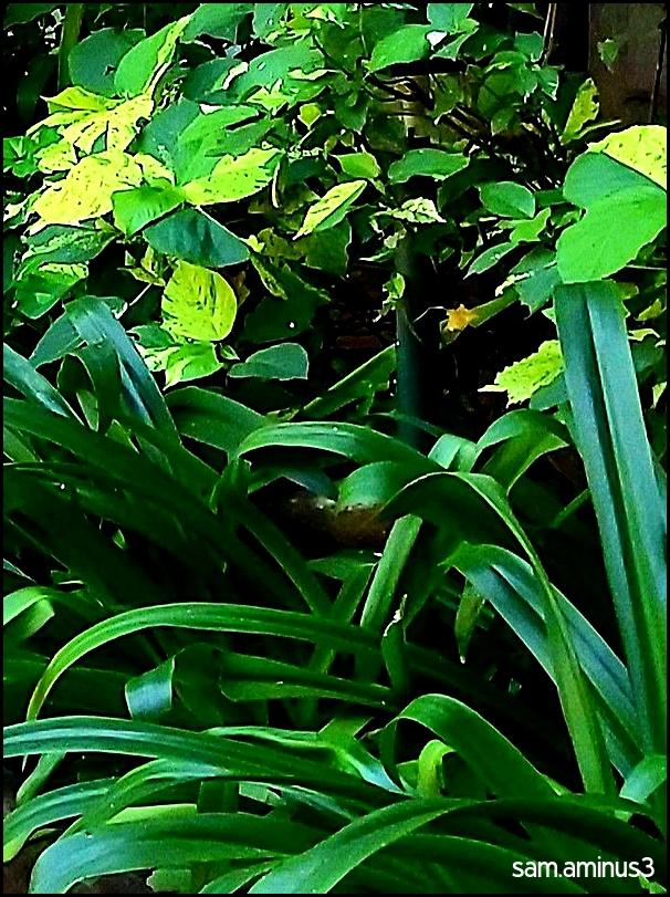 Green Hedges