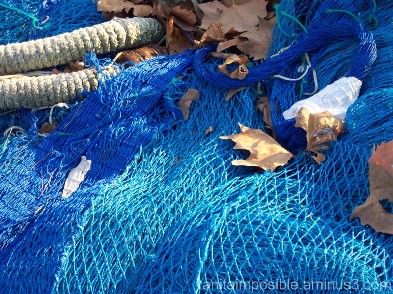Leaves, Ropes & Fishing Nets