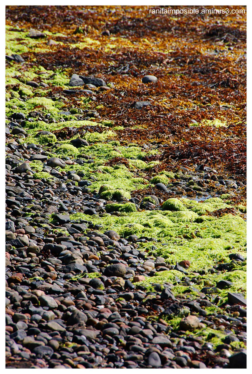 Pebbles & Seaweeds