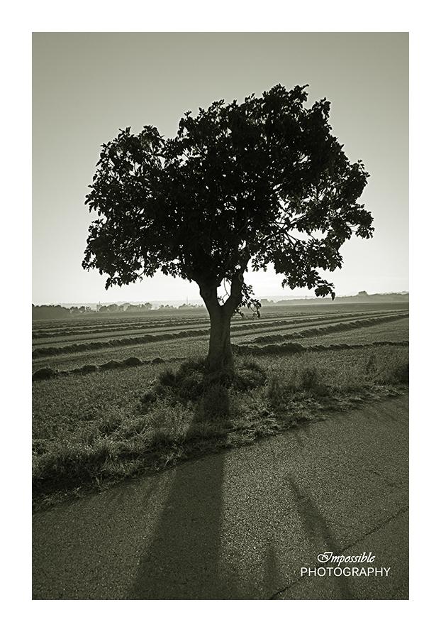 Tree & its Shadow