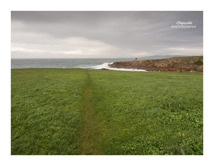 Trail to the Sea