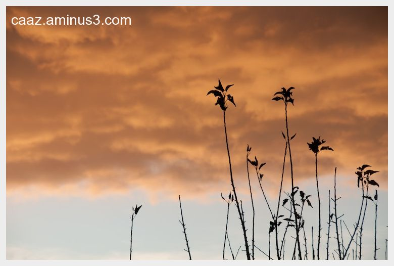 Autumn evening in Castilla